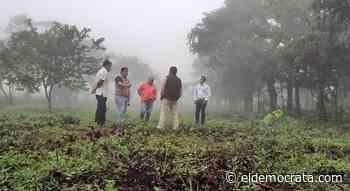 Ayuntamiento de Misantla sigue apostando a la reforestación - El Demócrata