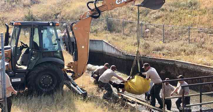 Utah wildlife officials save moose trapped in golf course cistern where her calves drowned