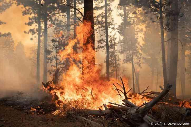 World's top companies urge action on nature loss ahead of U.N. talks