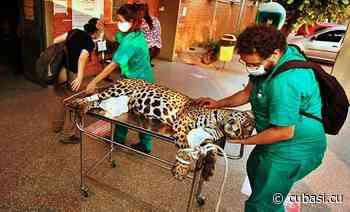 Incendios en Brasil destruyen principal reserva de jaguares en Sudamérica - CubaSÍ