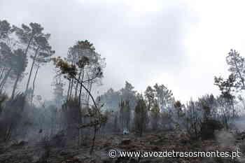 Incêndio em Perafita está dominado - A Voz de Trás-os-Montes
