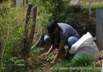 Siembra de árboles para la construcción de un túnel verde en Nátaga - Diario del Huila