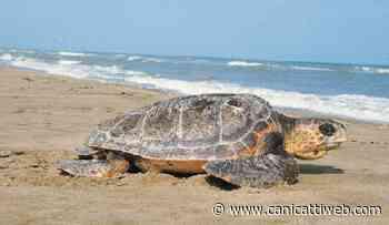 Incontro a Porto Empedocle sulla tutela della biodiversità del Mediterraneo - Canicatti Web Notizie