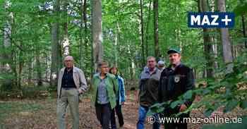 Pritzwalk: Der Wald – ein zerbrechliches Gut - Märkische Allgemeine Zeitung