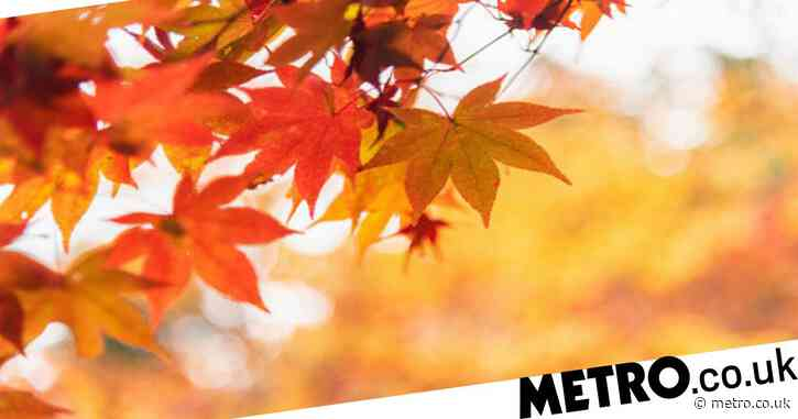What is the Autumn equinox – when are the four equinoxes?
