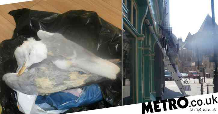Man batters seagull to death because it took his sandwich
