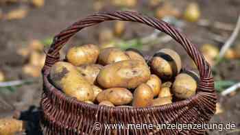 Kartoffeln und Co.: Dieses Gemüse niemals roh essen - es ist giftig