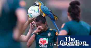Parrot lands on head of Brazilian footballer during practice match – video