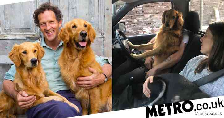 Gardeners' World star Monty Don's dog Nellie jumps behind the wheel in adorable snap
