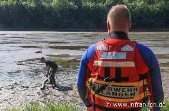 Großeinsatz in Erlangen: Schwan veräppelt Feuerwehr für drei Stunden