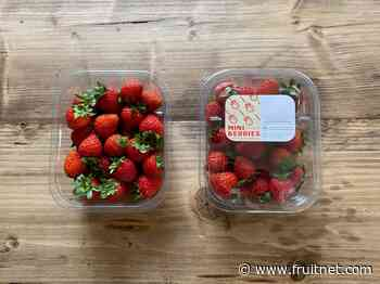 Hugh Lowe Farms launches mini strawberries