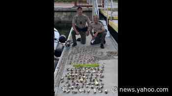 Three jailed after being caught with 109 undersized lobsters in the Keys, police say