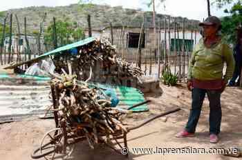 Vecinos de Portachuelo caminan hasta una hora para buscar leña - La Prensa de Lara