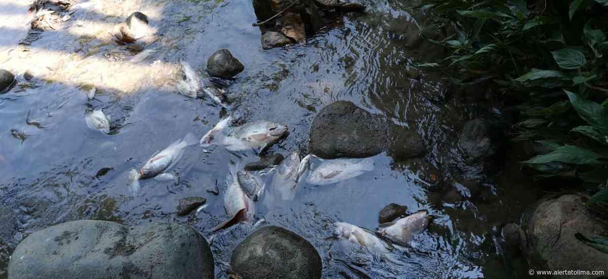 Comunidad estaría vendiendo pescados contaminados en Venadillo Tolima - Alerta Tolima