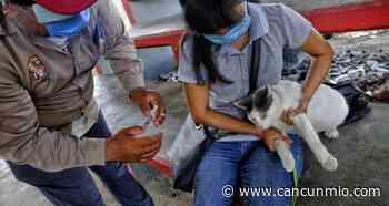 Se reajustan puestos de vacunación antirrábica en Isla Mujeres - Cancún Mio