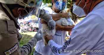 Inicia campaña de vacunación antirrábica en Isla Mujeres - Cancún Mio