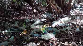 Turismo masivo provoca contaminación de manglares en Isla Mujeres - PorEsto