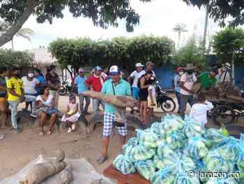 Yuca de 140 kilos en Planeta Rica fue donada a familias vulnerables - LA RAZÓN.CO