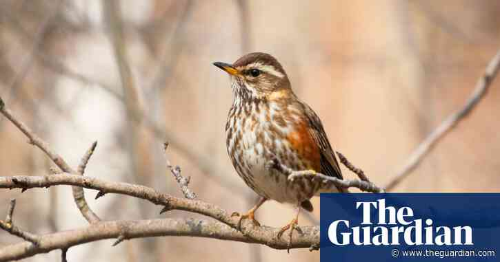 10 of the best places to spot migratory birds in the UK