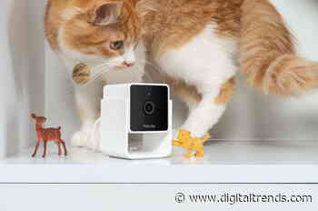 Petcube Cam takes the stress off your pets by bringing the vet to you