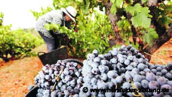 Wein aus Alicante: Franzose bringt Weine ohne Sulfite auf den Markt - Hersfelder Zeitung
