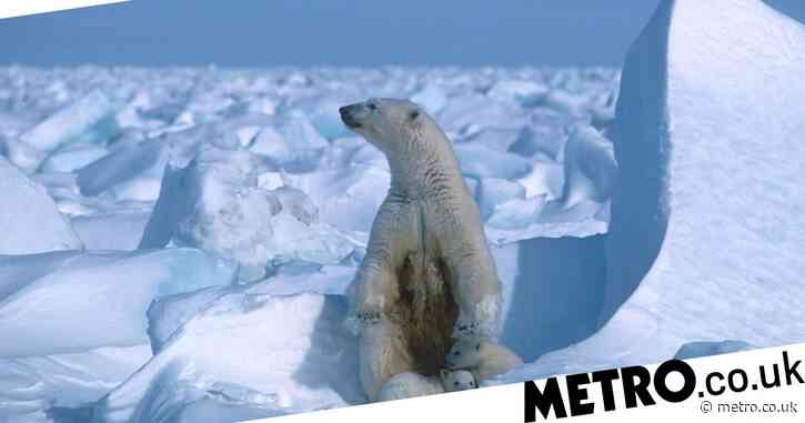 Arctic ice in 'meltdown' after heatwave and forest fires