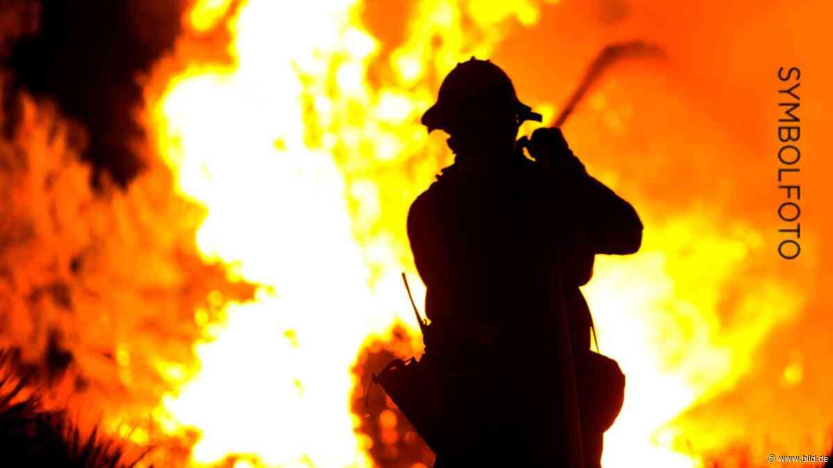 Roetgen: Feuer im Wald gelegt: Brandstifterin gefasst - BILD