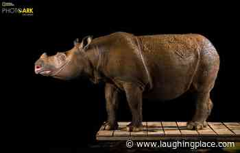 "National Geographic Celebrates World Rhino Day with Announcement of ""Photo Ark"" on Nat Geo WILD - LaughingPlace.com"
