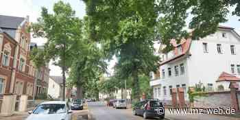 Quedlinburg will Befreiung vom Verbot der Fällung von Alleen beantragen: 50 Linden in Lindenstraße könnten gefällt werden - Mitteldeutsche Zeitung