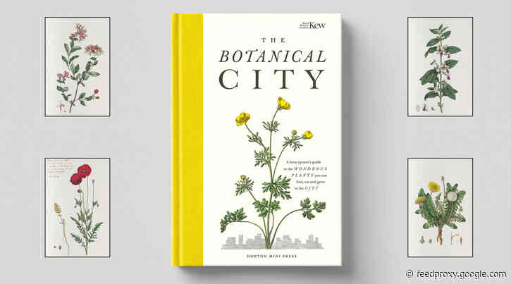 The Botanical City – A guide to the plants in the city