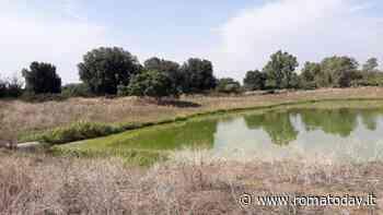 """Tor Tre Teste, la denuncia del Wwf: """"Le acque del laghetto della Mistica sono in uno stato critico"""""""