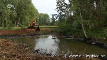 Natuurpunt dempt illegale visvijver en rooit bomen