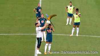 Un guacamayo se roba el show durante un partido de fútbol - Diario LAs Americas