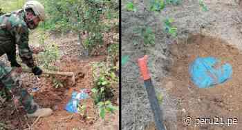 """Ayacucho: """"Los Sinchis de Mazamari"""" descubren 433 kilos de cocaína enterrados en zona Vraem - Diario Perú21"""
