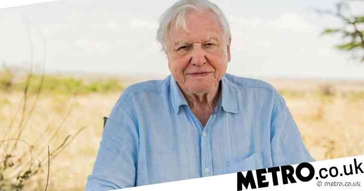 Sir David Attenborough hits one million Instagram followers four hours after sharing first post