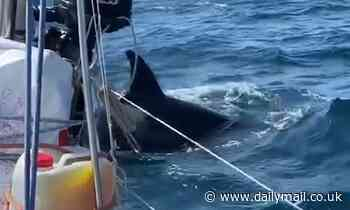 Sailing banned off northern Spanish coast after several vessels have been attacked by killer whales