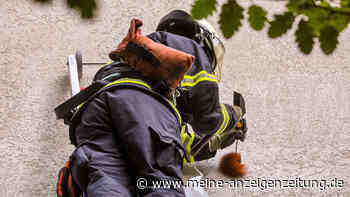 Eichhörnchen steckt in Wand: Ein Spezialfall für die Feuerwehr