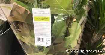 Waitrose mocked for selling £6 'autumn foliage' as leaves are free outside