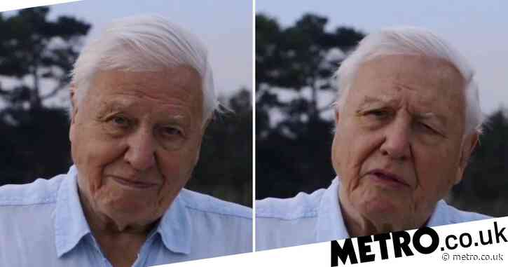 Sir David Attenborough breaks record as fastest to get a million Instagram followers beating Jennifer Aniston