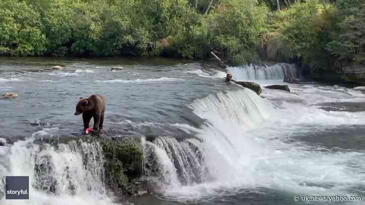 Bear Fishes For Salmon at Katmai National Park and Preserve