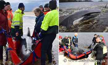 Rescuers forced to start putting down pilot whales in mass stranding