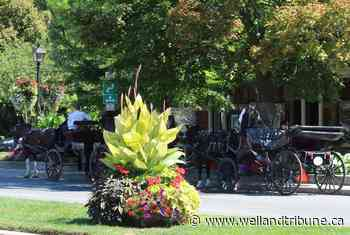 Sentineal Carriages gets new weekend location in Niagara-on-the-Lake - WellandTribune.ca