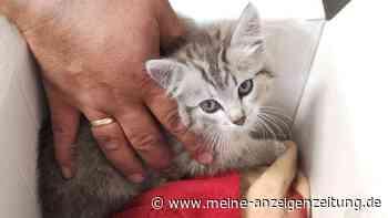 Kleiner Kater auf großer Fahrt: Kätzchen überlebt Horrortrip und wird adoptiert