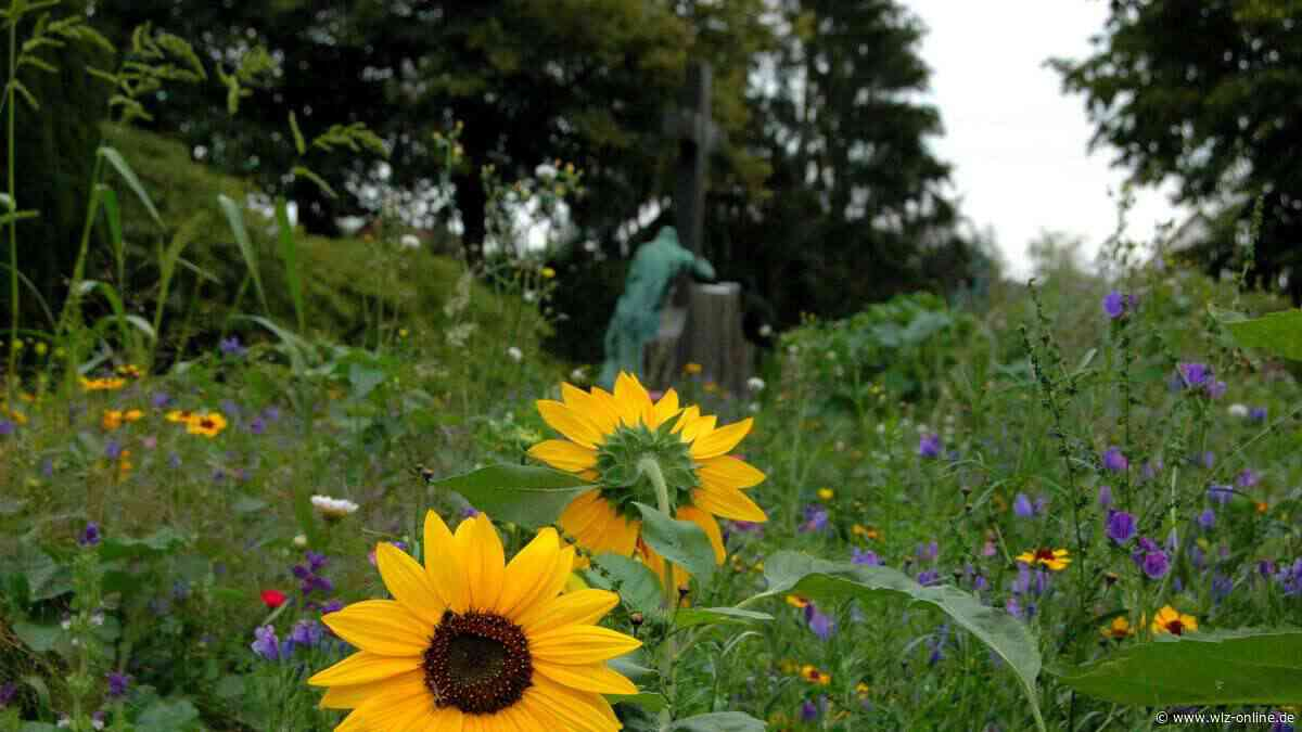 Blütenfelder im Stadtgebiet - wlz-online.de