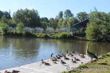 Politie plukt 'hitsige zwemmer' uit vijver van park Novarode - Het Nieuwsblad