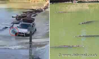 Cahills Crossing: Terrifying moment a driver runs over a CROCODILE at a notorious river crossing