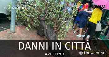 Avellino, dramma sfiorato: albero cade mentre bambini escono di scuola - The Wam