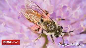 Newport population of rare bees found for the first time