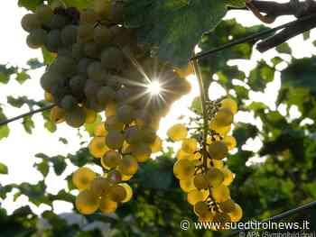 20 Drei-Gläser-Weine für Südtirol - Suedtirol News