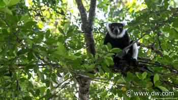 Coronavirus puts a deep dent in Madagascar's lemur tourism | DW | 25.09.2020 - Deutsche Welle